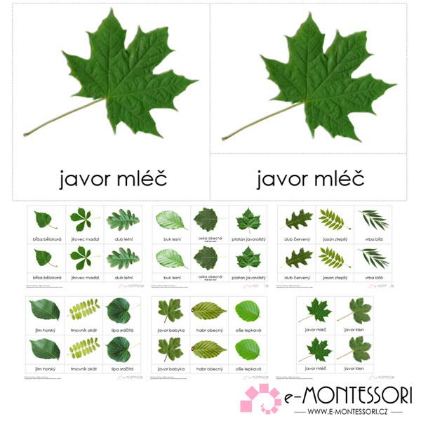 Montessori třísložkové karty Listy běžných stromů