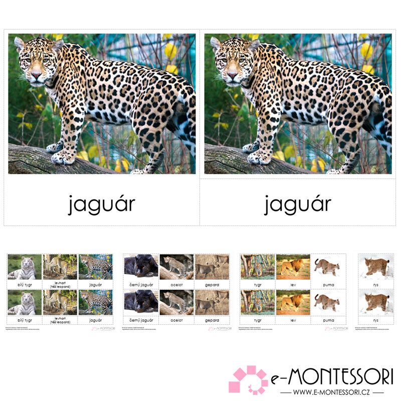 Montessori třísložkové karty Kočkovité šelmy