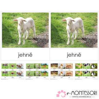 Montessori třísložkové karty Mláďata z farmy