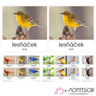 Montessori třísložkové karty Ptáci