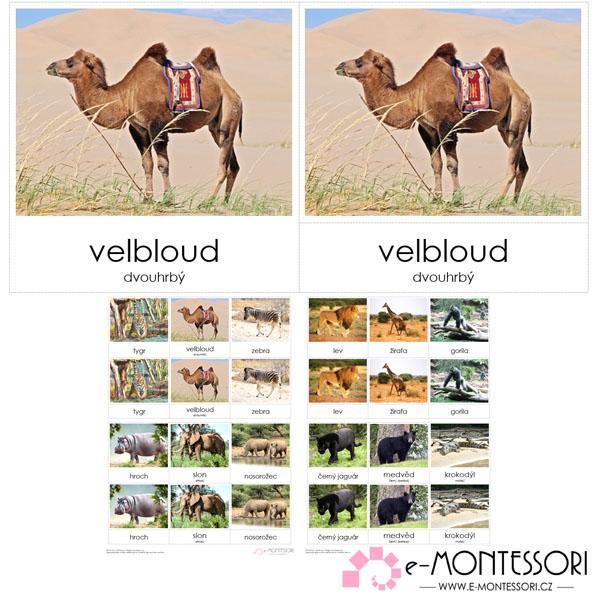 Montessori třísložkové karty Safari