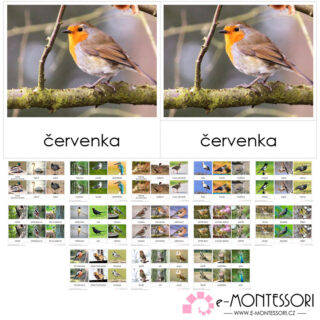 Montessori třísložkové karty Ptáci České republiky