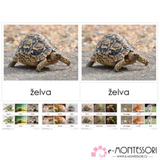 Montessori třísložkové karty Domácí mazlíčci
