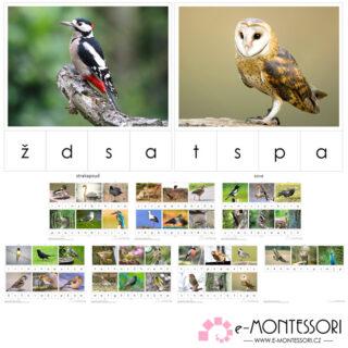 Montessori karty Ptáci České republiky - první a poslední písmeno